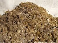 Mule Poop