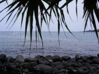 WWOOF Hawaii - Two steps to the Pacific