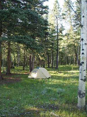 Tent Camping in the Aspen Conifer Forest of Northern New Mexico