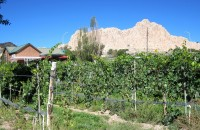 Vivac Tasting Room and 1725 vineyard